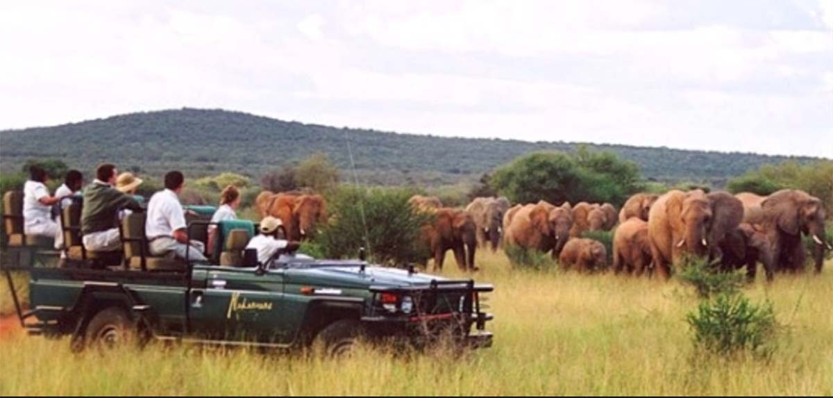 safari truck full of guests watching large herd of elephants