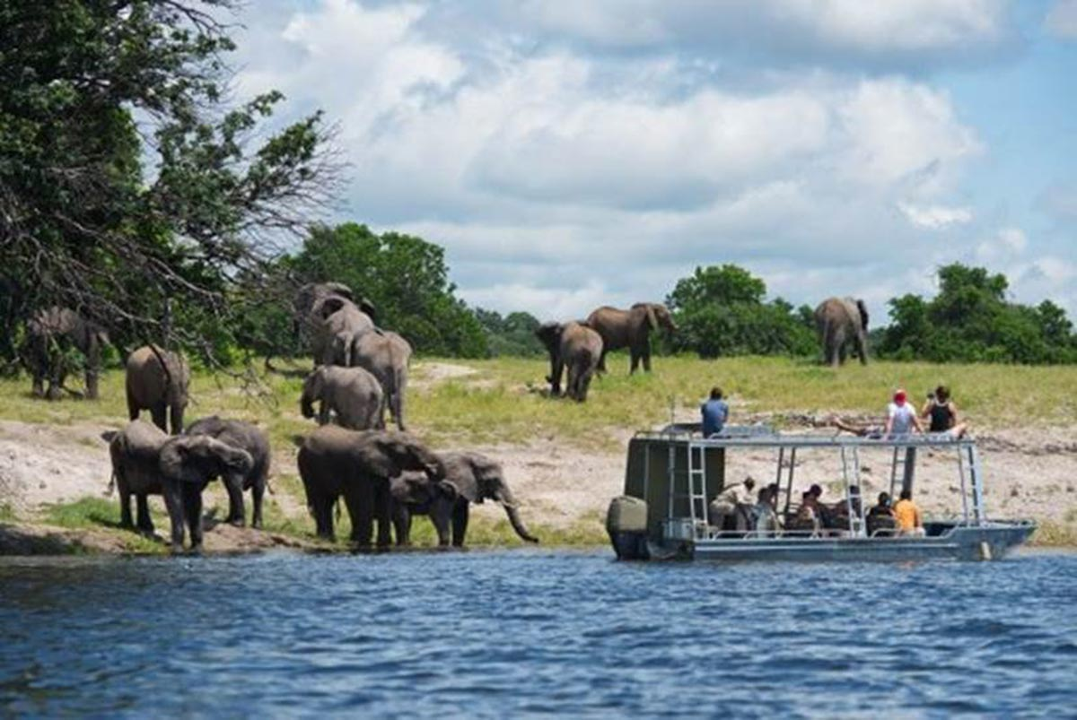 elephants come to water's edge to see Safari boat with guests
