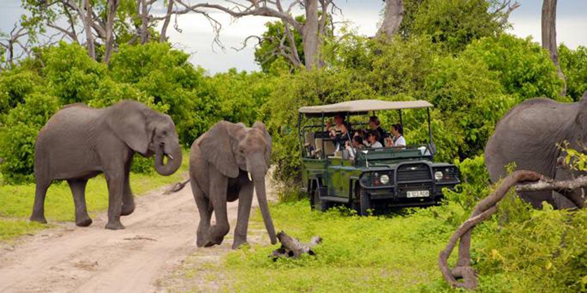three elephants walk past safari truck