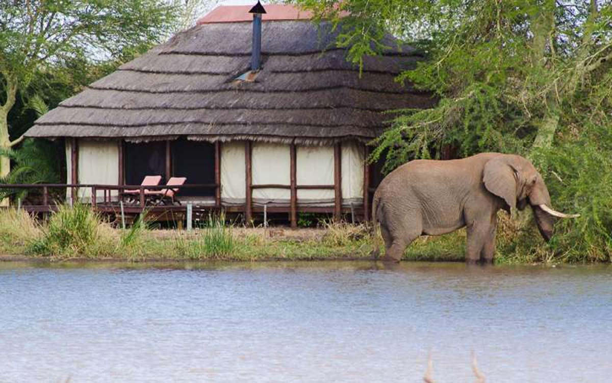 elephant walking by hotel hut in water